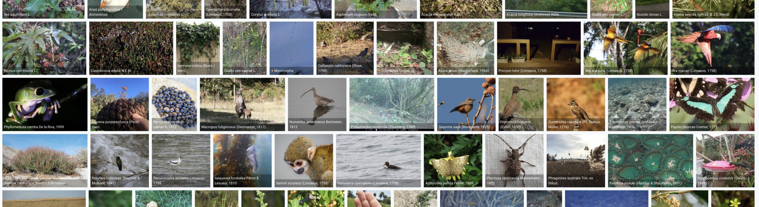 Chile aporta con más de un millón de registros de presencia de especies al logro mundial de la plataforma GBIF