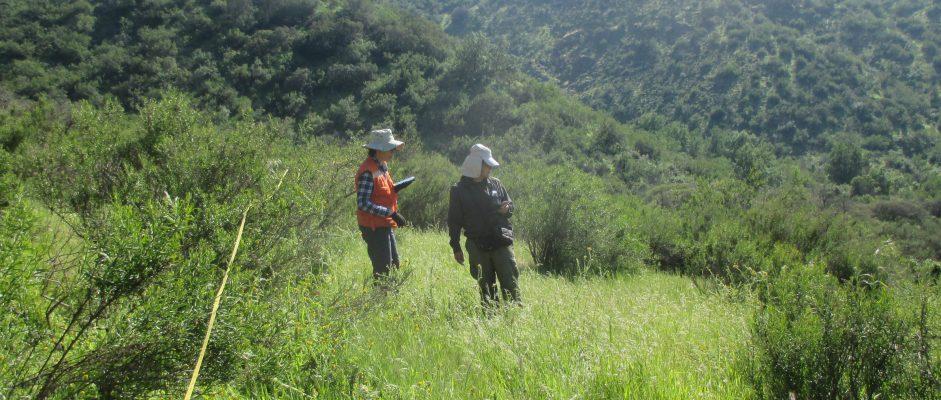 Inédito levantamiento de 10.000 registros florísticos reveló que origen nativo predomina en las montañas del Valle Central de Chile